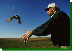 Releasing a banded and radio-collared prairie-chicken in the early morning. image (c) Joel Sartore www.joelsartore.com