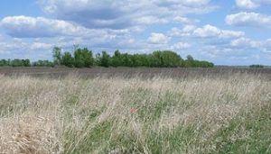 Typical Minnesota prairie-chicken habitat