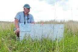 "Dr. Joe Flanagan, DVM, Director of Veterinary Services, Houston Zoo assists with a ""white board"" used to measure and document vegetation at a nest site."