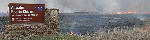 A controlled burn to maintain healthy grasslands at the Attwater Prairie Chicken National Wildlife Refuge in Texas.