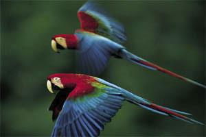 birds-sartore-2007