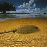 ocean-sartore-2007