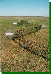A line of prairie-chicken traps set up on the booming ground.