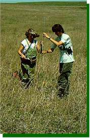 Measuring height and density of grassland vegetation. These factors affect the species composition and abundance of grassland birds.