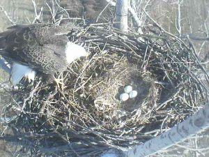 USFWS photo 1.3.11.third egg