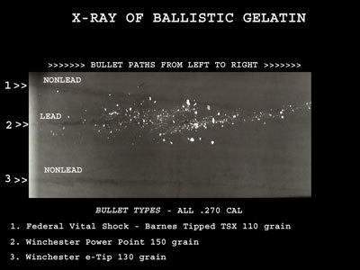 An x-ray radiograph of ballistic gelatin that has been shot with traditional lead ammunition (top), as well as non-toxic copper ammunition (bottom) - [Courtesy of The National Park Service]