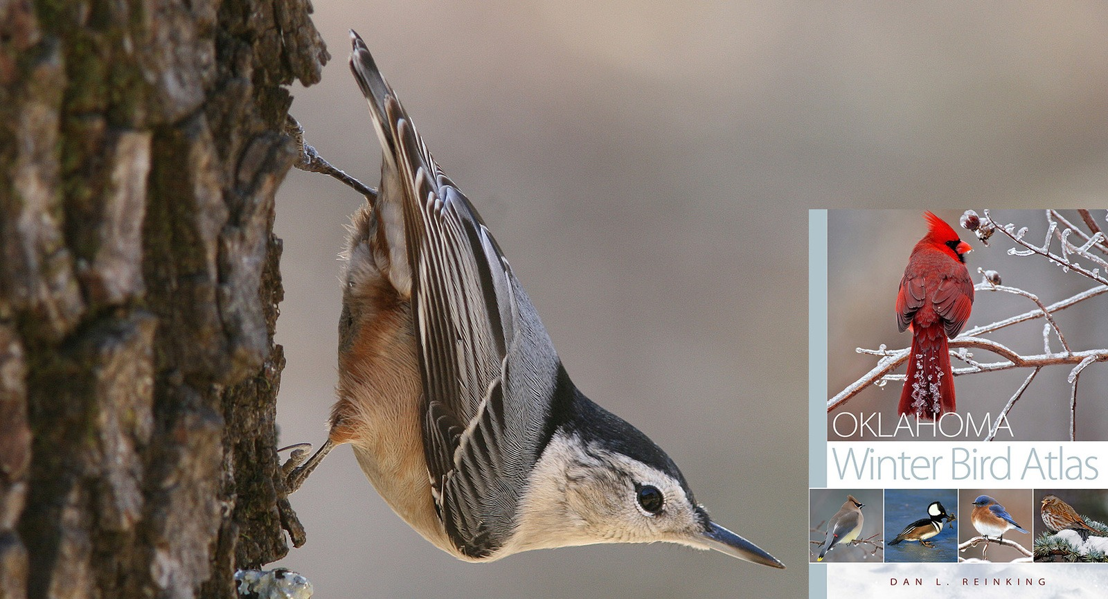 Slide Show Of Some Of My Bird Photos >> Sutton Center Avian Research And Education